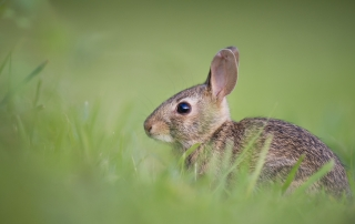 A small bunny in a field - are financial services scared like him?